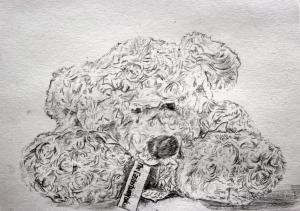 Daisy (5)
